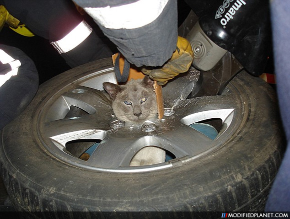 Cat Rocks A Bmw Wheel Around Its Neck