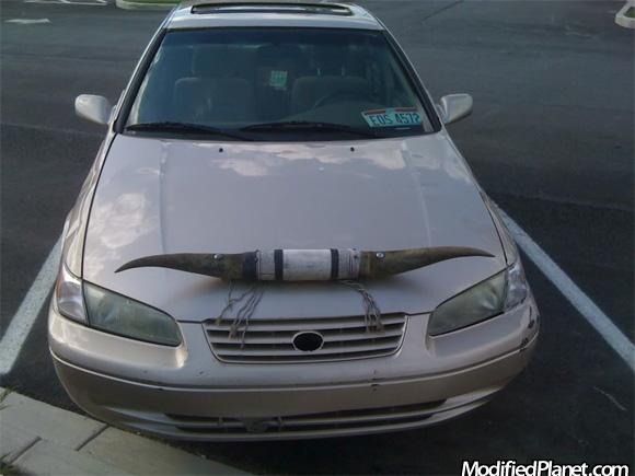 Car Photo Toyota Camry Cow Long Horns