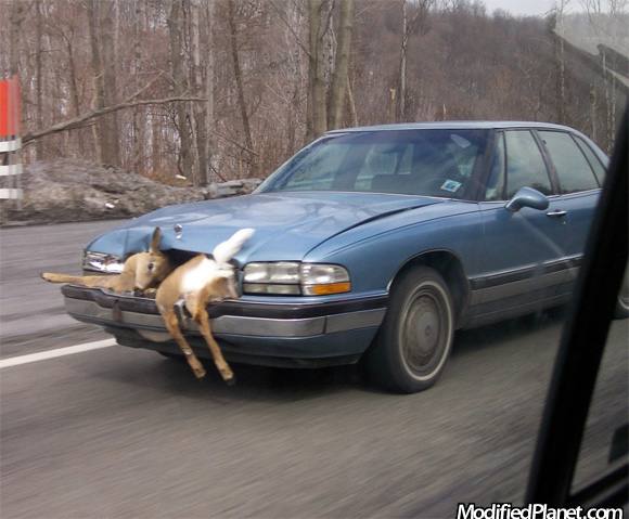1994 Buick Park Avenue Hits Deer And Keeps Driving