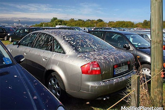 car-photo-2003-audi-a6-covered-in-bird-poop-fail